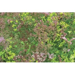 UK Green Roofing - Sedum Plus Mat 1 sq.m
