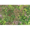 UK Green Roofing - Sedum Mat 1 sq.m