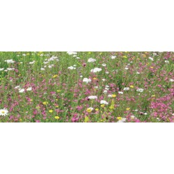 UK Green Roofing - Wildflower Mat 1 sq.m
