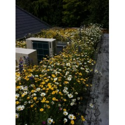 Mr Green Sedum & Wildflower Flat Living Roof Kit - Extra Water Storage
