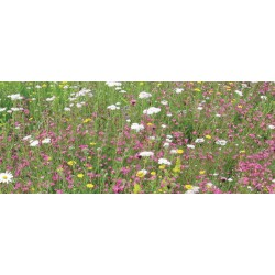 Mr Green Sedum & Wildflower Pitched Living Roof Kit
